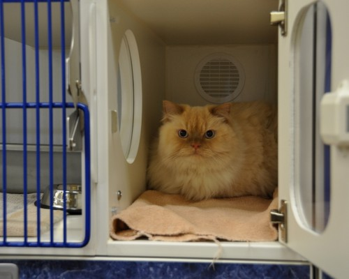 Our new cat condos give our feline patients the option of moving to a quiet, private location.
