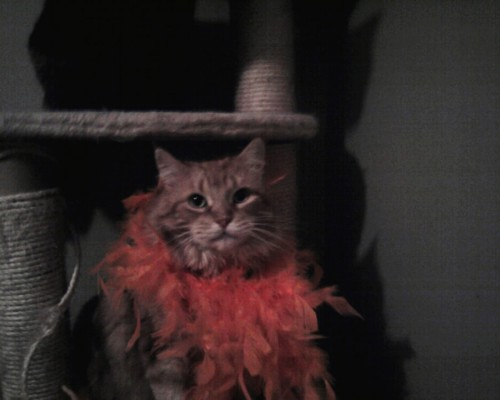 Mandolin Rose in her Halloween boa.