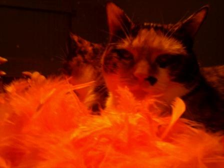 Eerie Callie and her Halloween boa