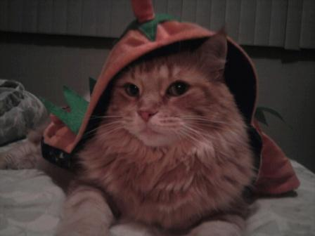 Mandolin Rose in her pumpkin hat