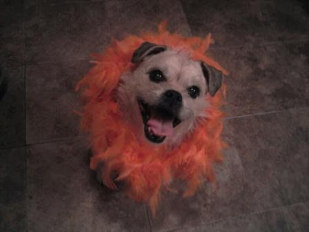 Too adorable Maggie in her Halloween boa