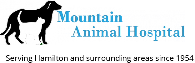 Mountain Animal Hospital | Your Local Veterinarian in Hamilton, Ontario